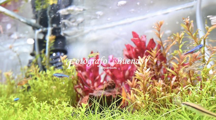 【Aquarium】(30cm) 2020/4/15
